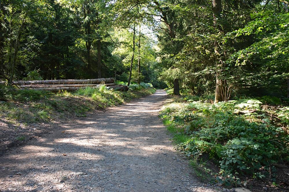 mooiste wandelingen in de Ardennen bospad