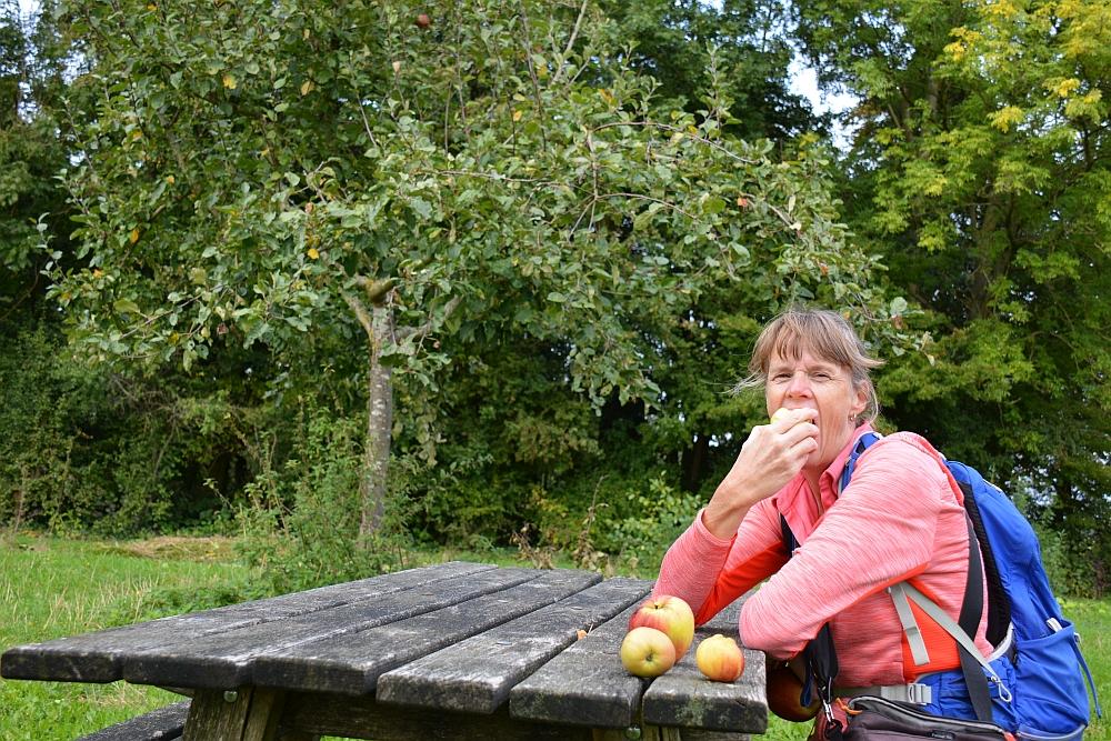 appels eten in Boomgaard de Boswachter Haarzuilens