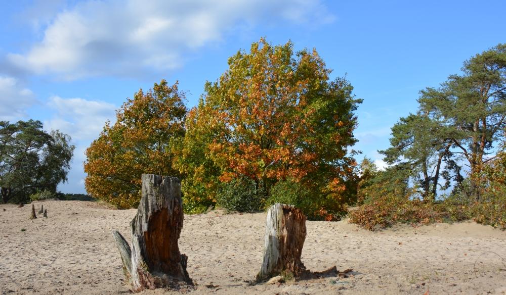 eerste herfstkleuren Lange Duinen Soest