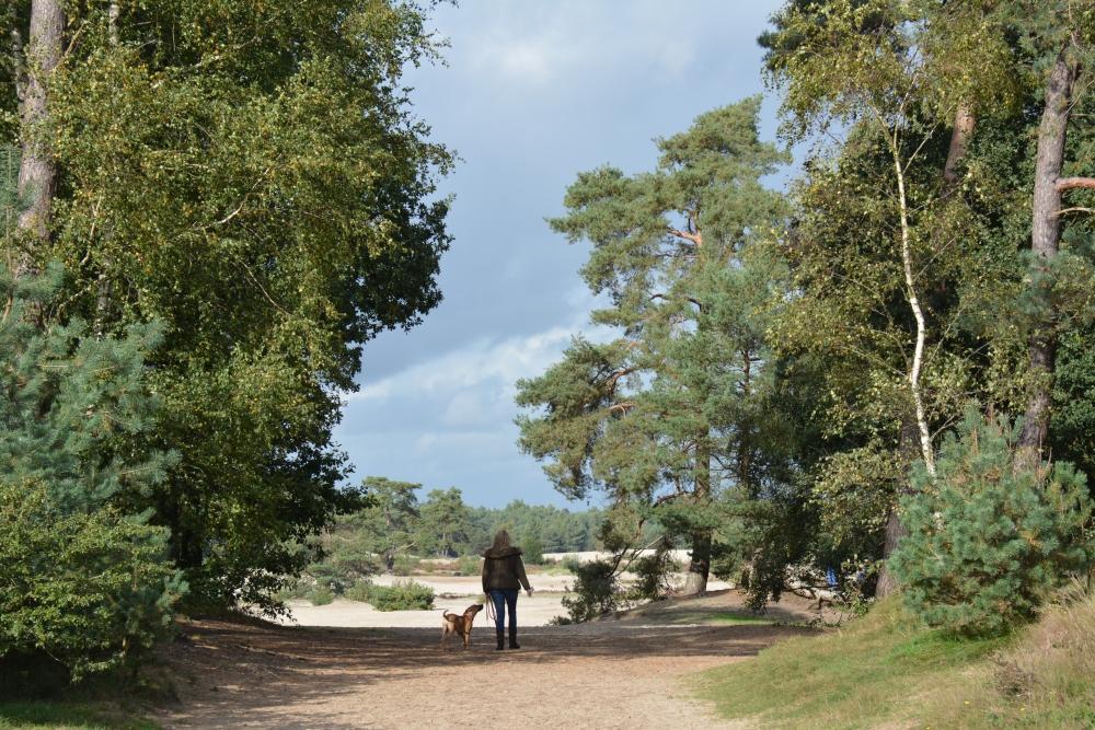 honden losloopgebied in de Soesterduinen