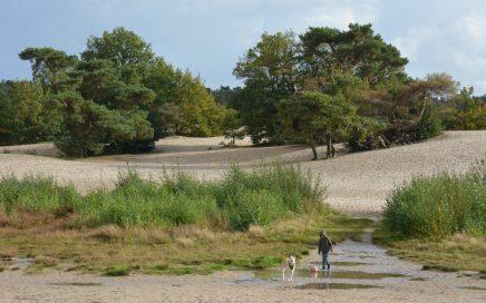met de hond en kind in de Lange Duinen Soest