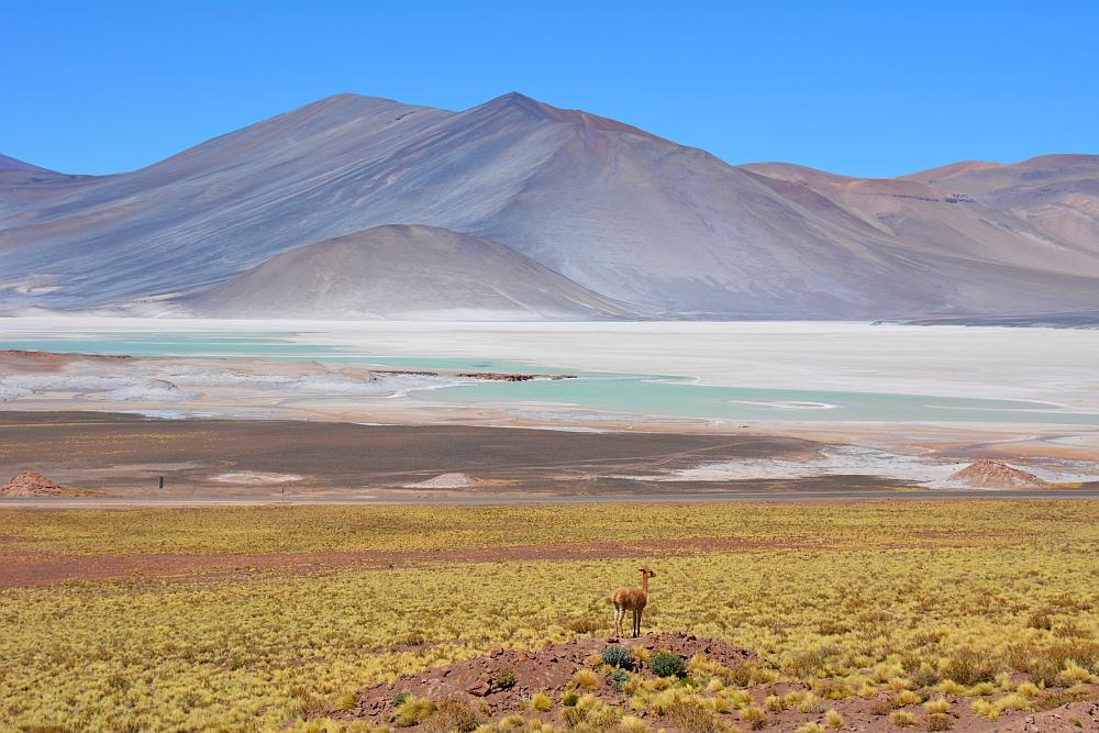 de surreële wereld van de Piedras Rochas in Chili