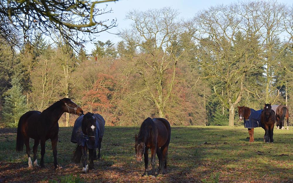 paarden van manege Quadenoord Renkum