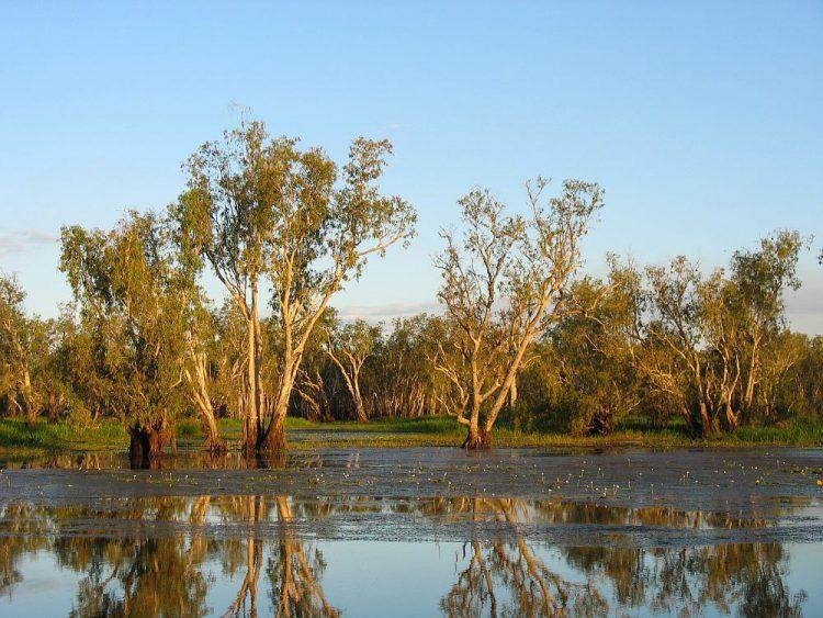 billabong Kakadu National Park