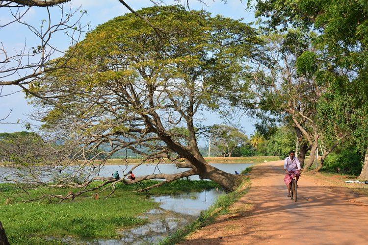 fietsen bij Tissamaharama Sri Lanka