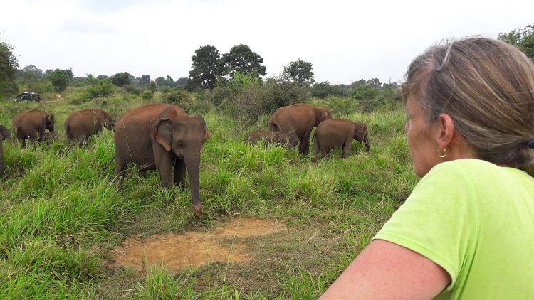 olifanten in Hurulu Eco Park Sigiriya Sri lanka