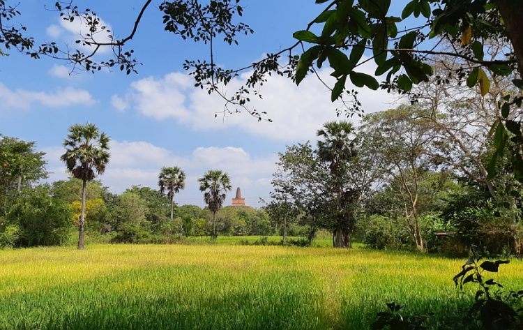 tempels en rijstvelden Anuradhapura Sri lanka
