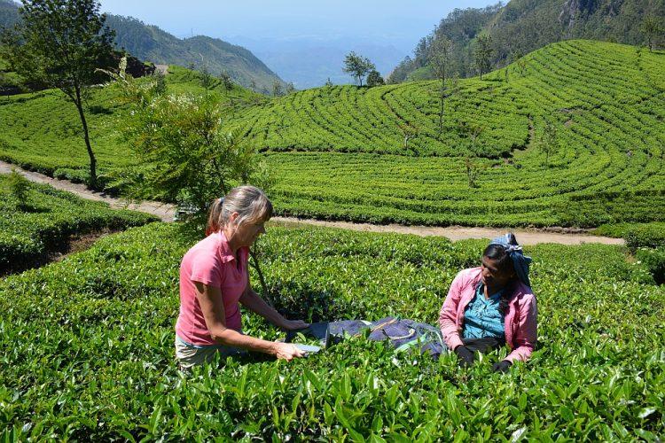 theeplantages Lipton's seat Sri lanka