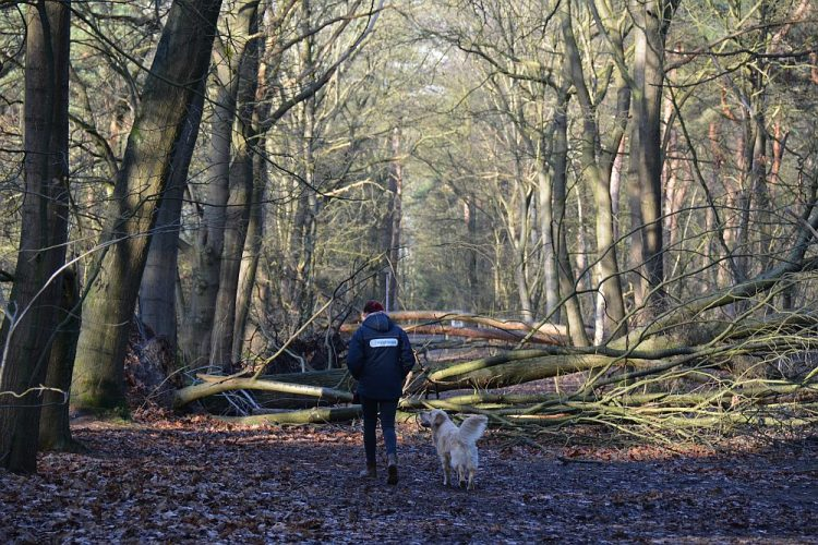 wandelen met de hond in Herperduin, de Maashorst
