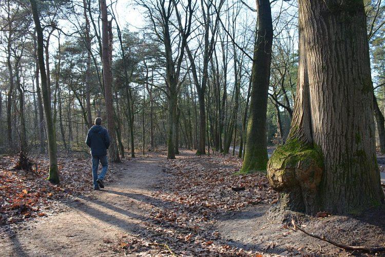 winter wandeling Herpse bossen bij Oss