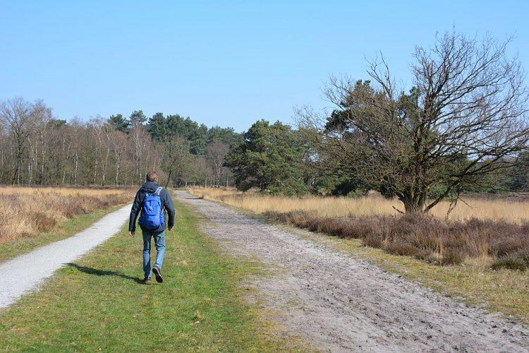Neterselse Heide Brabant