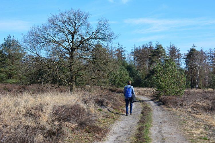 wandeling over de Groote Heide en door de Leenderbossen