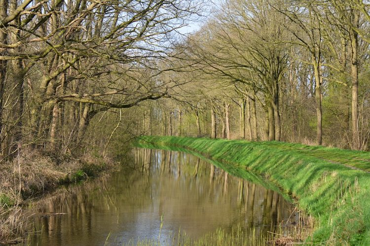 waterrijke natuur in de Kampina, Brabant