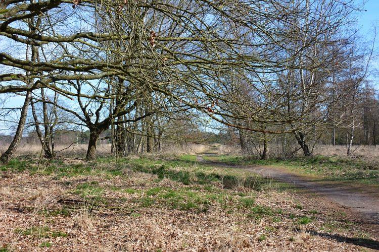 Heide bij Achelse Kluis