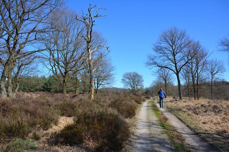 Trage Tocht Herkenbosch door de Meinweg