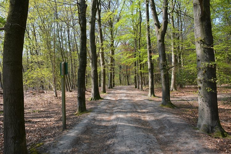 beukenbossen op landgoed Baest Oirschot