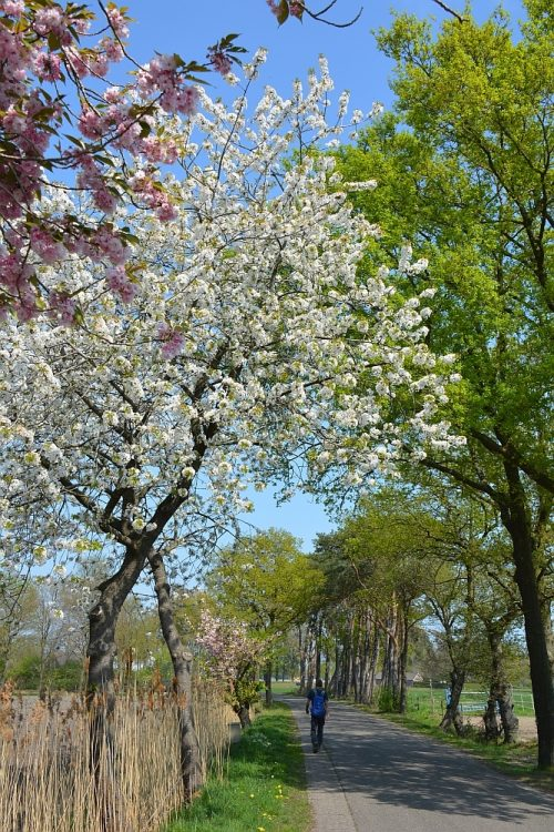 bloesembomen tijdens wandeling bij de Heilige Eik