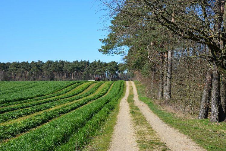 boerenland en bos langs de Trage Tocht Herkenbosch