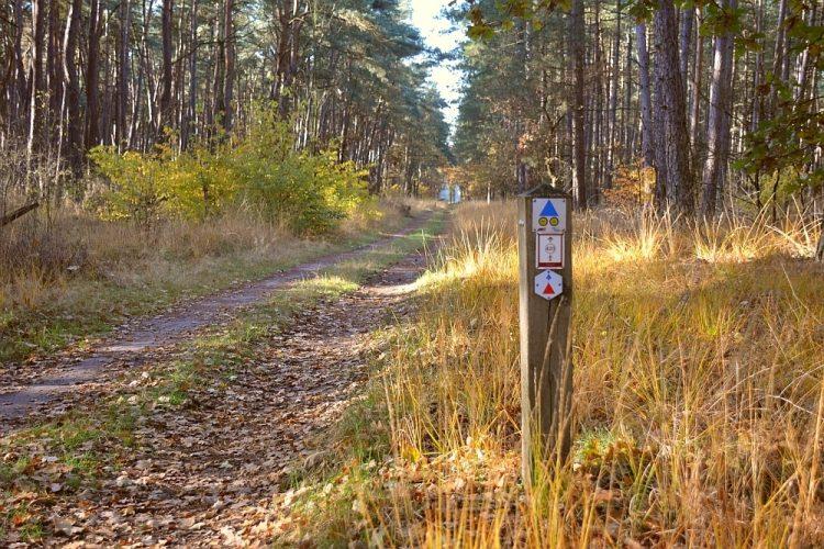 bospad in het Hobos bij Neerpelt