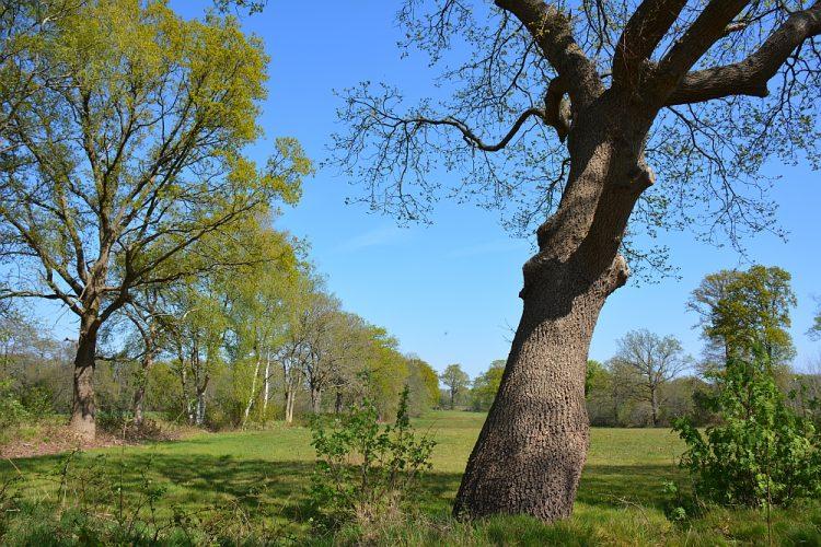 grasland in Drentsche Aa