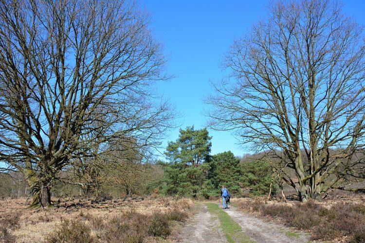 heide Nationaal Park de Meinweg Limburg