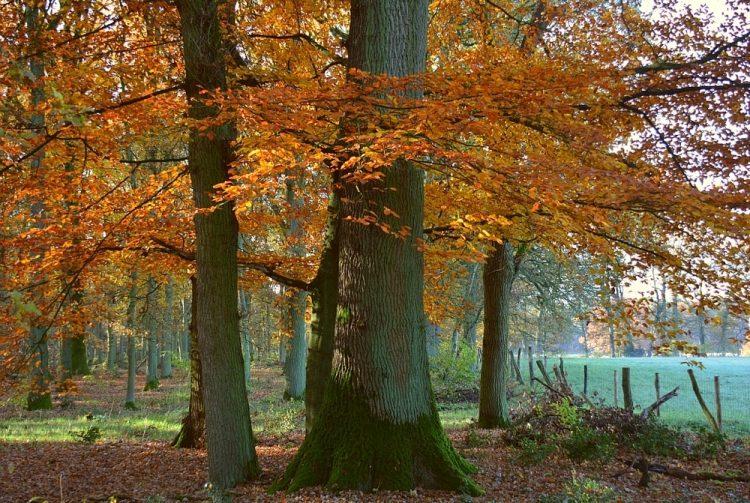 kleuren in het Hobos wandelen Bosland in Belgisch Limburg