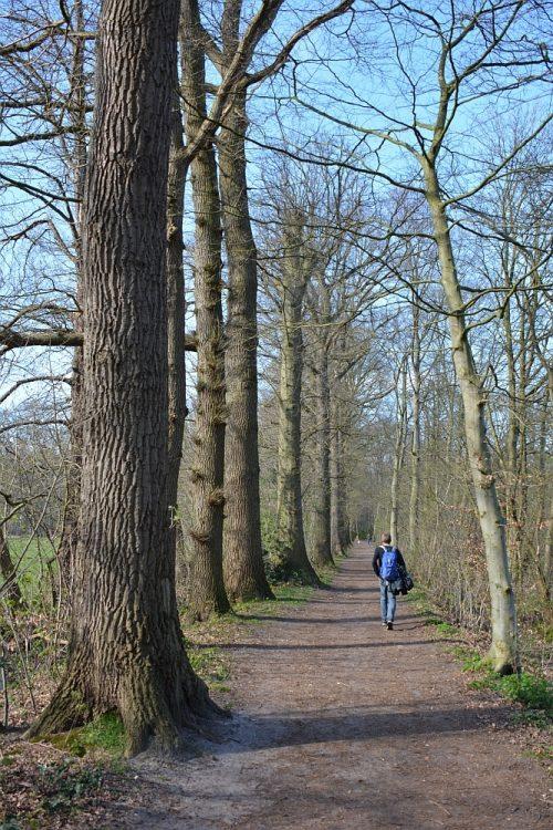 oude beukenlaan landgoed Plantloo Trage Tocht Waalwijk