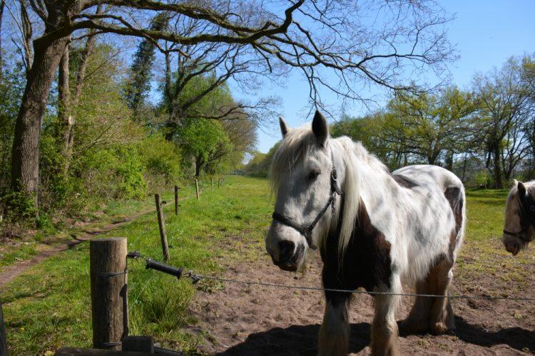paarden bij het beekdal Anloërdiepje Drenthe