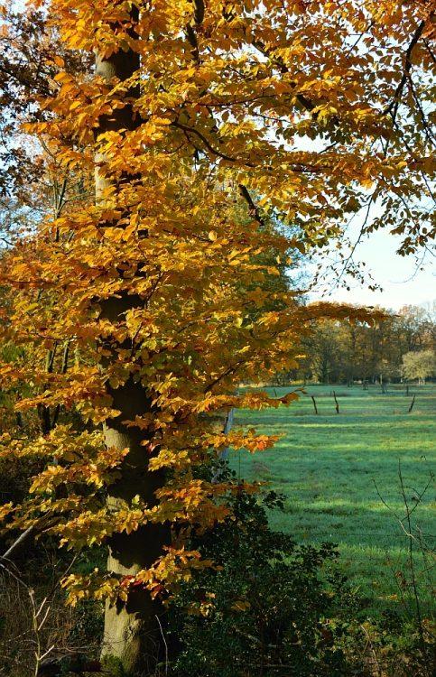 rand bos en akkers rode wandelroute Hobos Neerpelt België