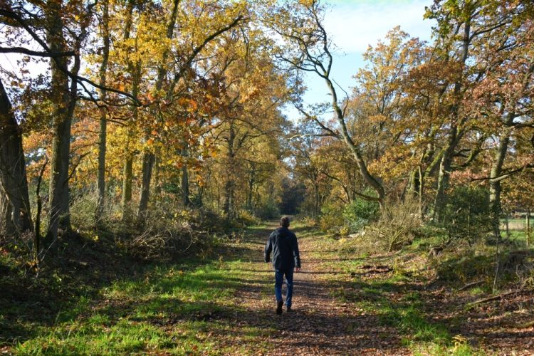 rode wandelroute Hobos in Bosland Neerpelt