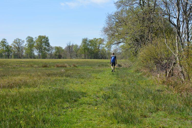 ruig wandelpad in Nationaal Park Drentsche Aa