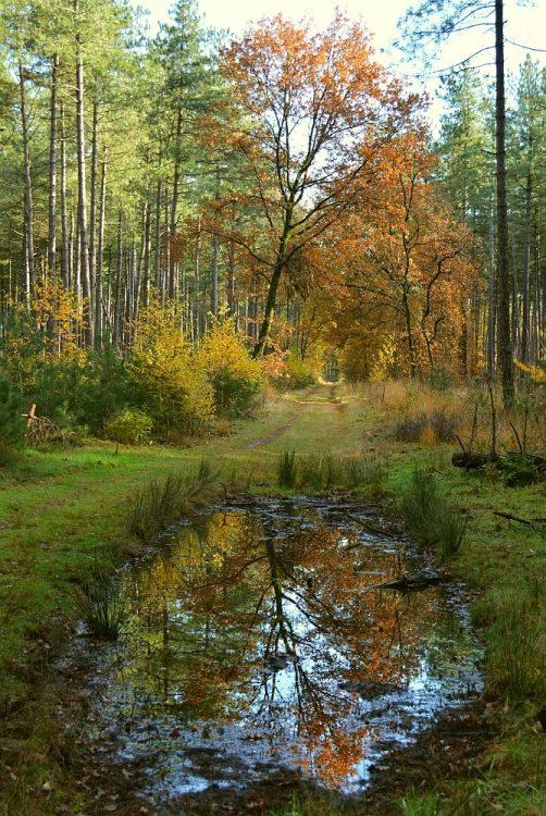 spiegeling herfstkleuren bomen in plas in Hobos Neerrppelt