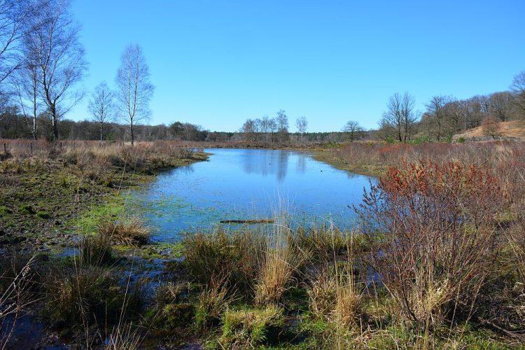 ven in Nationaal Park de Meinweg