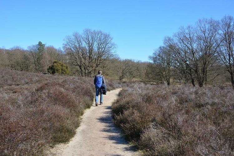 wandelen in Limburg Trage Tocht Herkenbosch