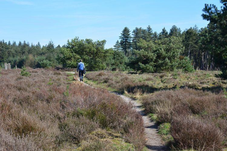 wandeling Groote heide en Leenderbos vanuit Achelse Kluis
