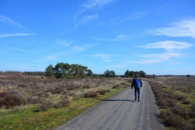 wandeling Groote heide en Leenderbossen