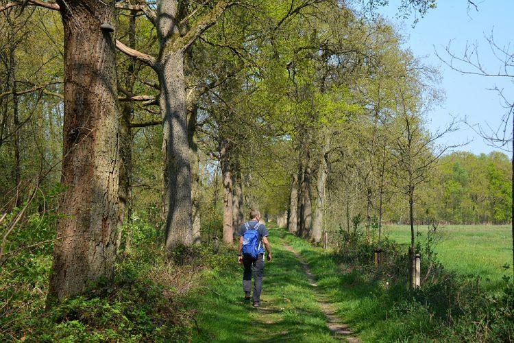 wandeling rond de Heilie Eik en landgoed de Baest Oirschot