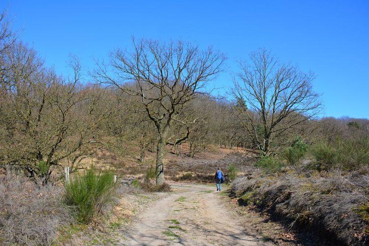 wandelroute de Meinweg Limburg