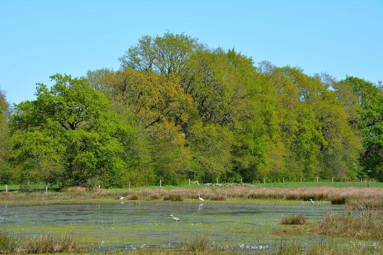 waterplas met reigers boswachterij Gees