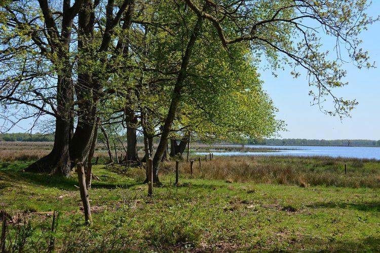 waterrijke natuur boswachterij Gees