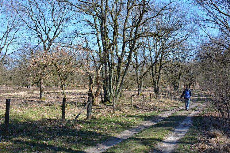 winterwandeling Nationaal Park de Meinweg