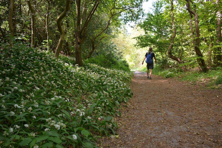 Trage Tocht Bergen wandelroute Noordhollands Duinreservaat