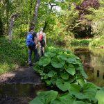 beekdal van de Swalm Limburg