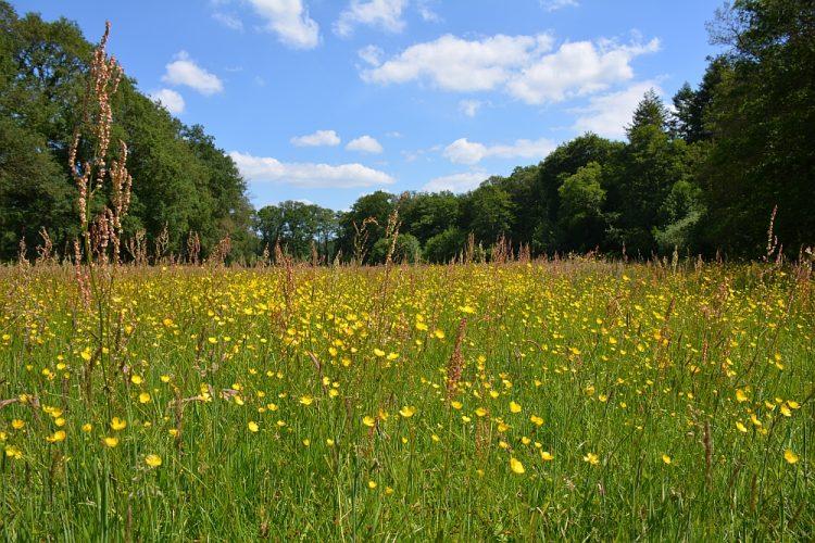 bloemen weide Landgoed Slangenburg Doetinchem