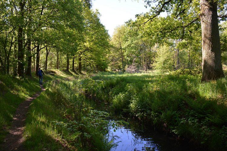 bosbeek Oude Graaf in het Weerterbos