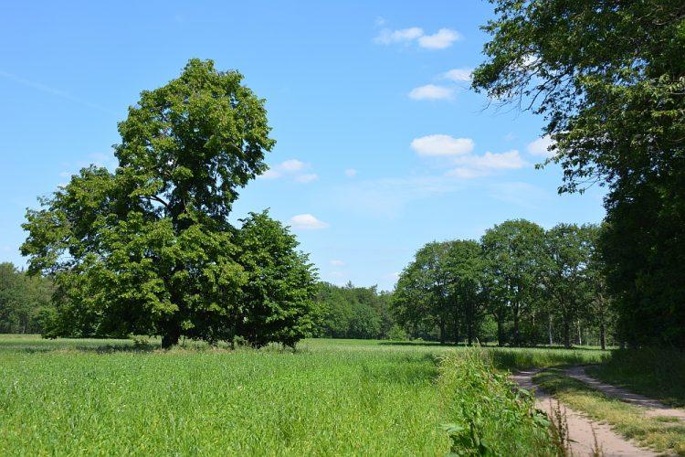 coulissenlandschap Achterhoek bij Trage Tocht Slangenburg