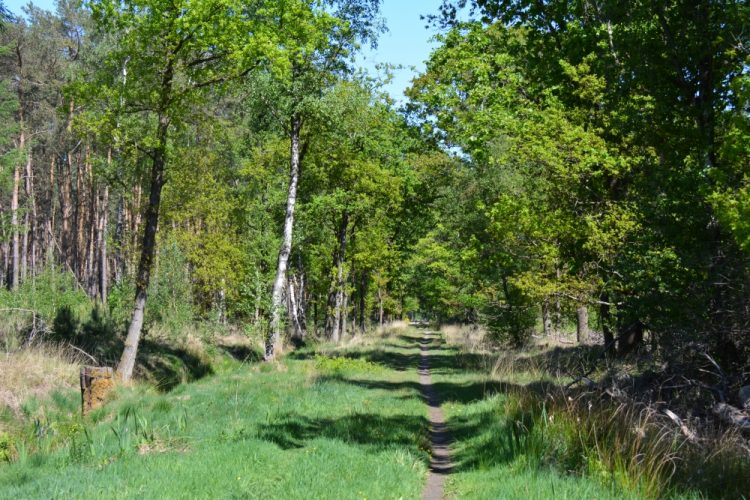 door het bos bij de Maaij Liskes Bergeijk