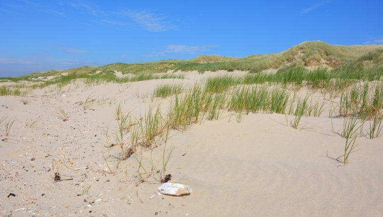 duinen bij Bergen aan Zee