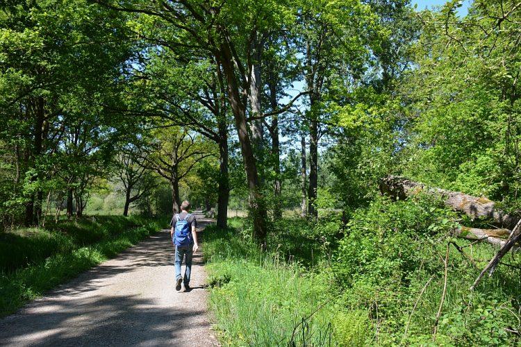 fiets en wandelpad in het Weerterbos
