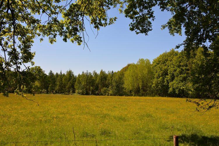 gele velden bij het Weerterbos